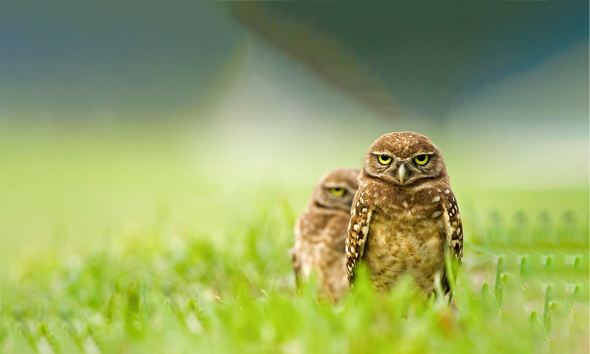 Night Owls May Face Special Challenges >> Owls Defenders Of Wildlife