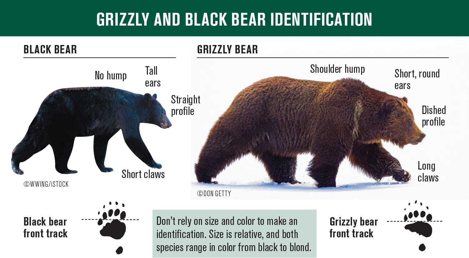 Bear ID Card