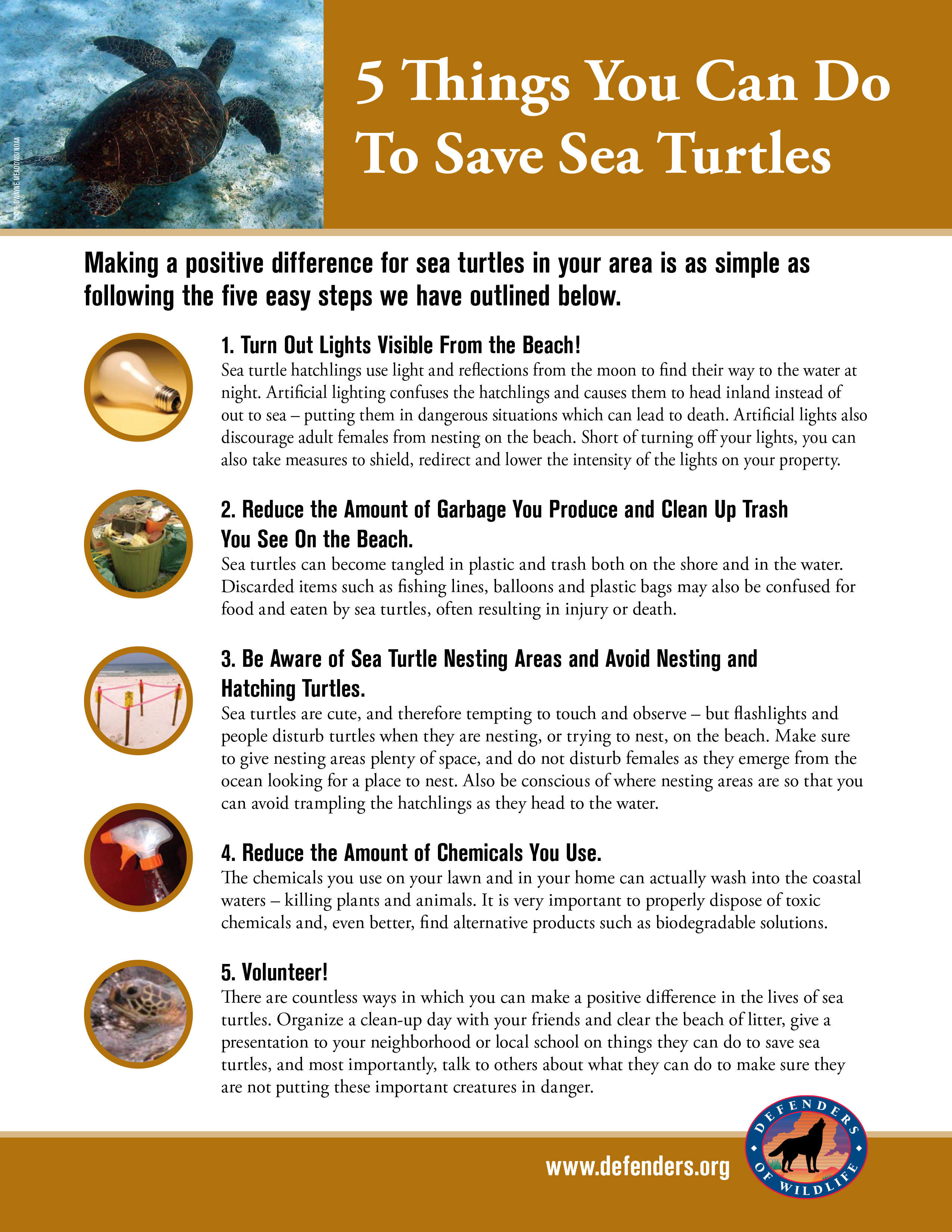 5 things you can do to save sea turtles