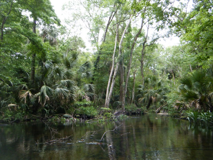 Wacissa River and Slave Canal trees