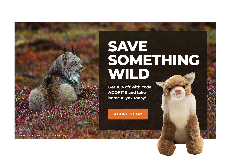 Canada Lynx | Defenders of Wildlife