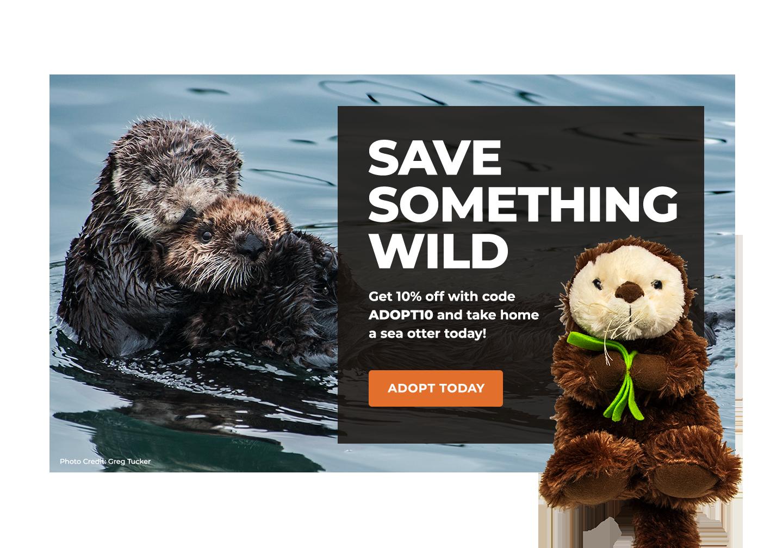 Sea Otter | Defenders of Wildlife