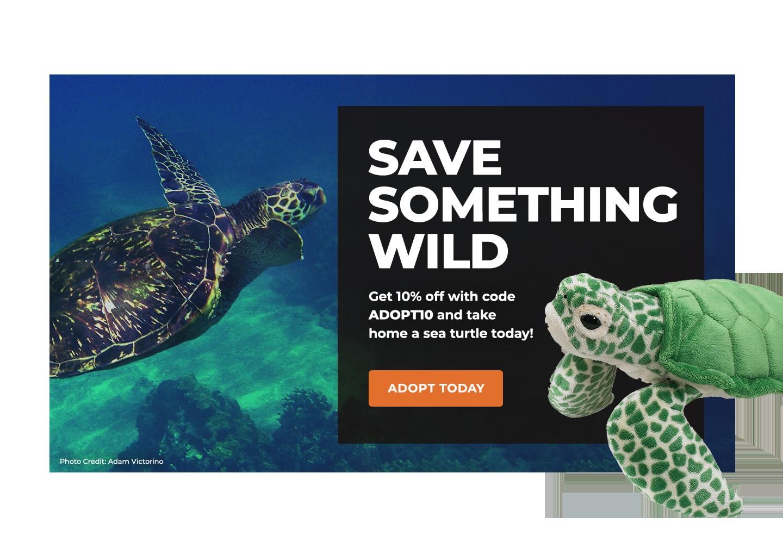 Sea Turtles | Defenders of Wildlife
