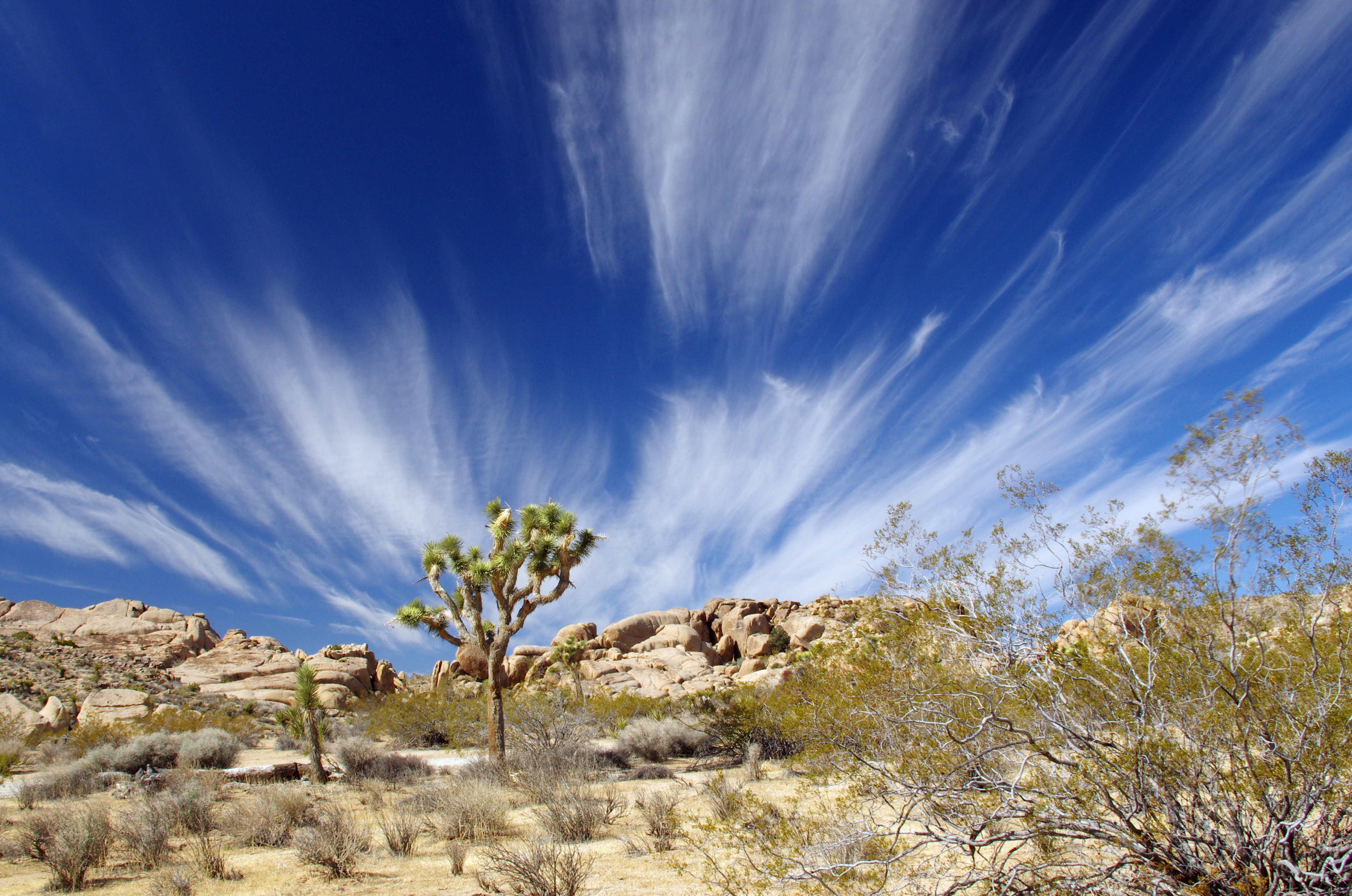 Wind and clouds Joshua Tree NP