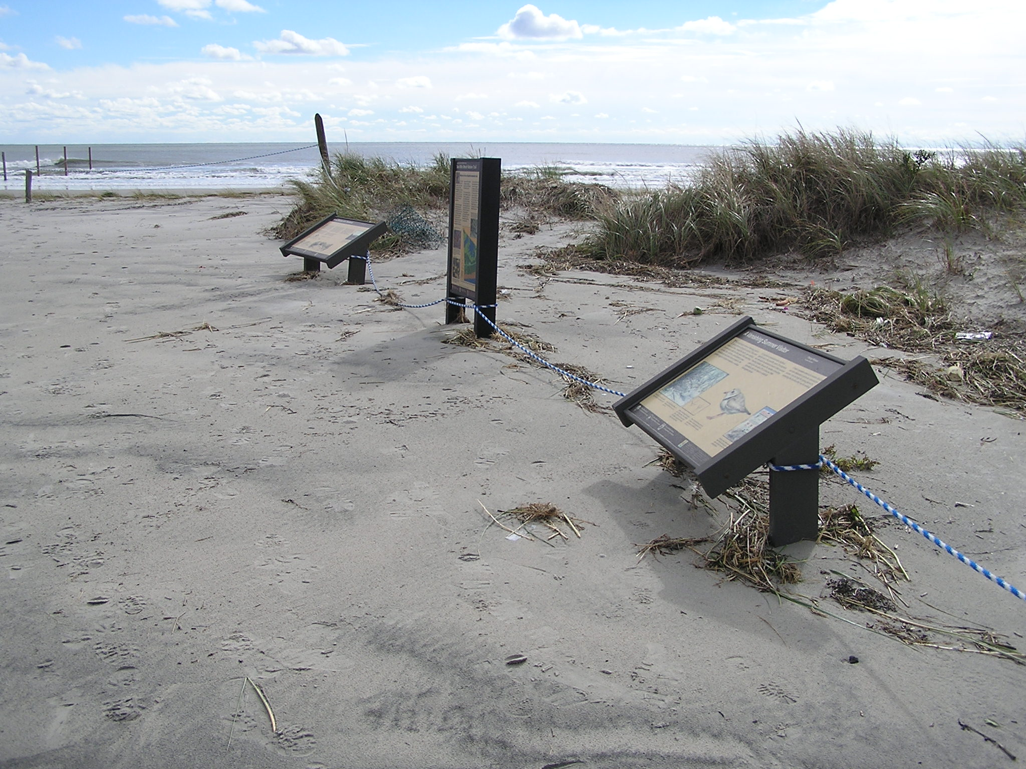 Hurricane Sandy damaged Cape May National Wildlife Refuge