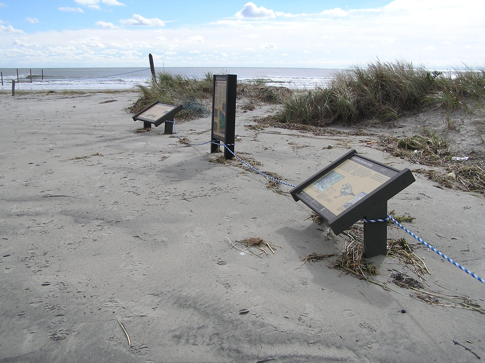 Hurricane Sandy damaged Cape May National Wildlife Refuge