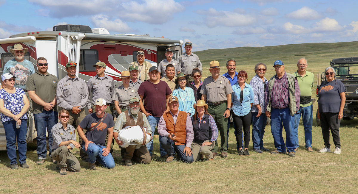 Buffalo group at Fort Peck release