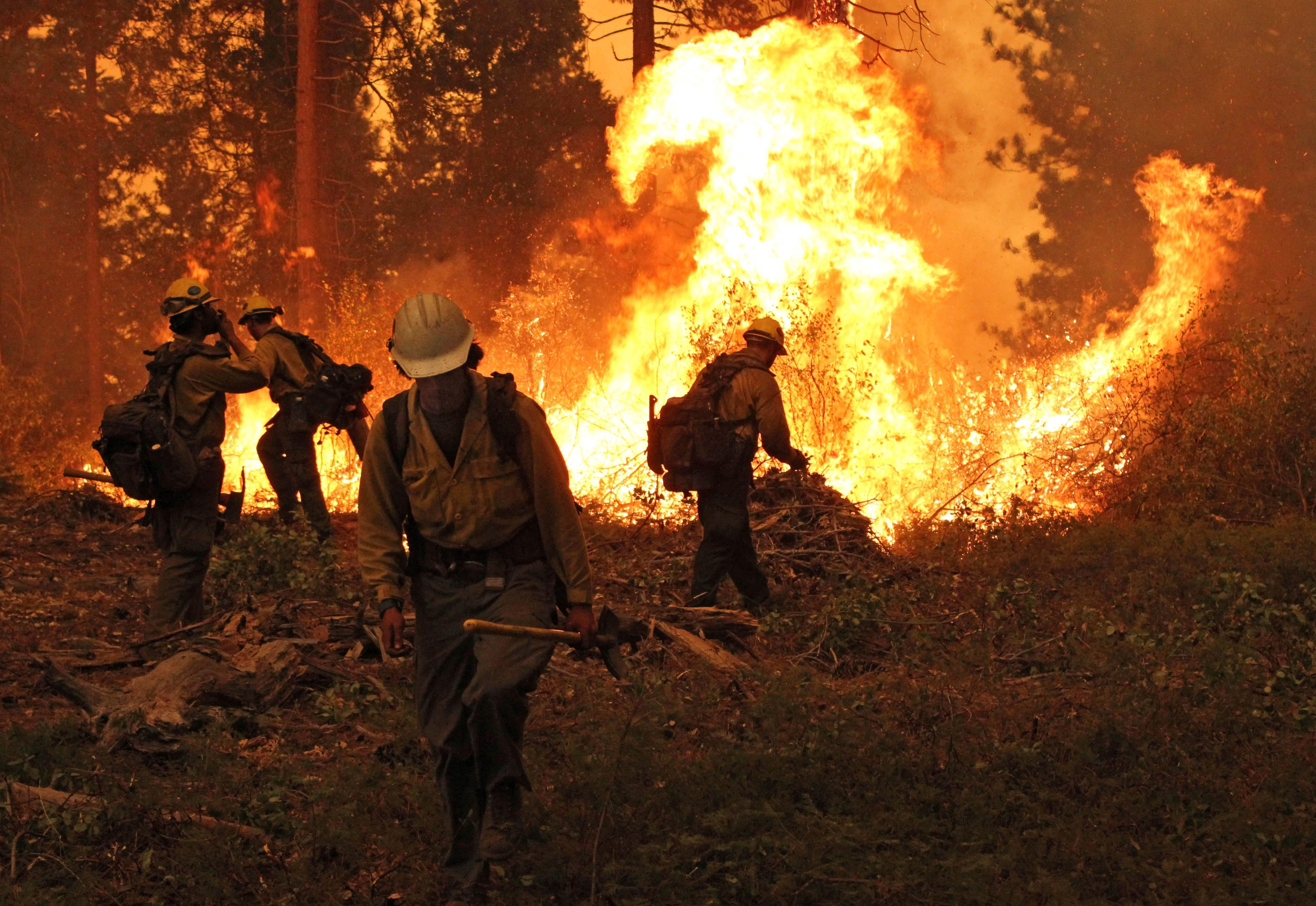 Silver State Interagency Hotshot Crew at work on a burning operation at the Rim Fire on the Stanislaus National Forest in California.