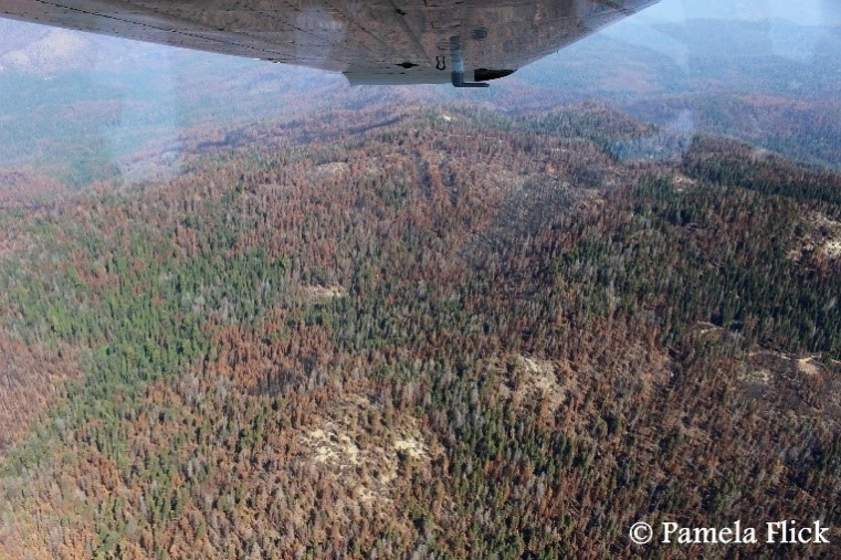Flying high above the Sierra National Forest to observe the 2017 Railroad Fire, which burned in an area of high tree mortality from beetle damage in the central Sierra Nevada