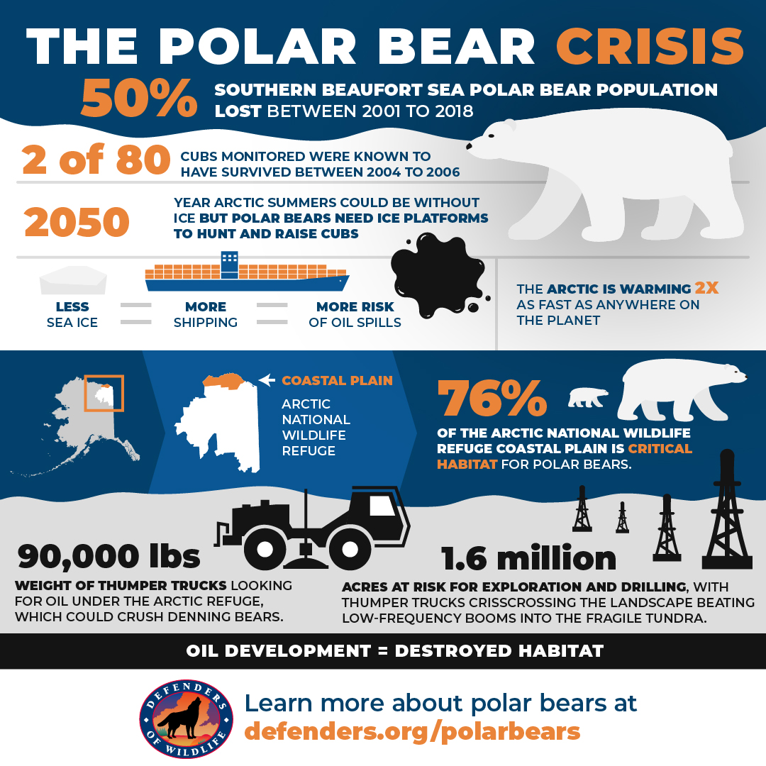 Polar Bear Crisi Infographic