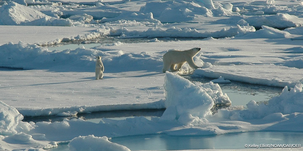 Polar bear mom and cub Beaufort Sea