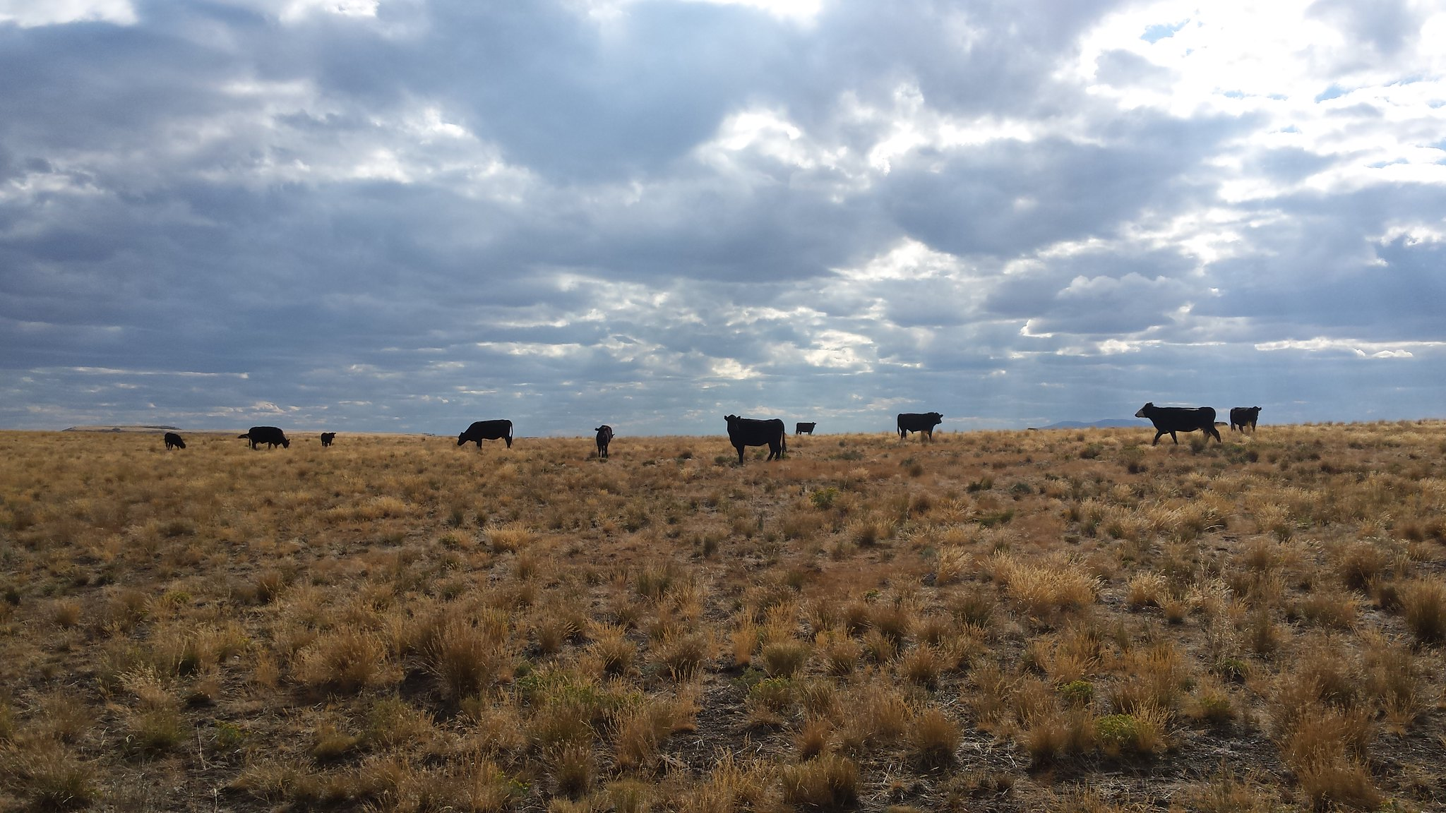 Cattle graze near the Trout Creek Mountains in southeastern Oregon