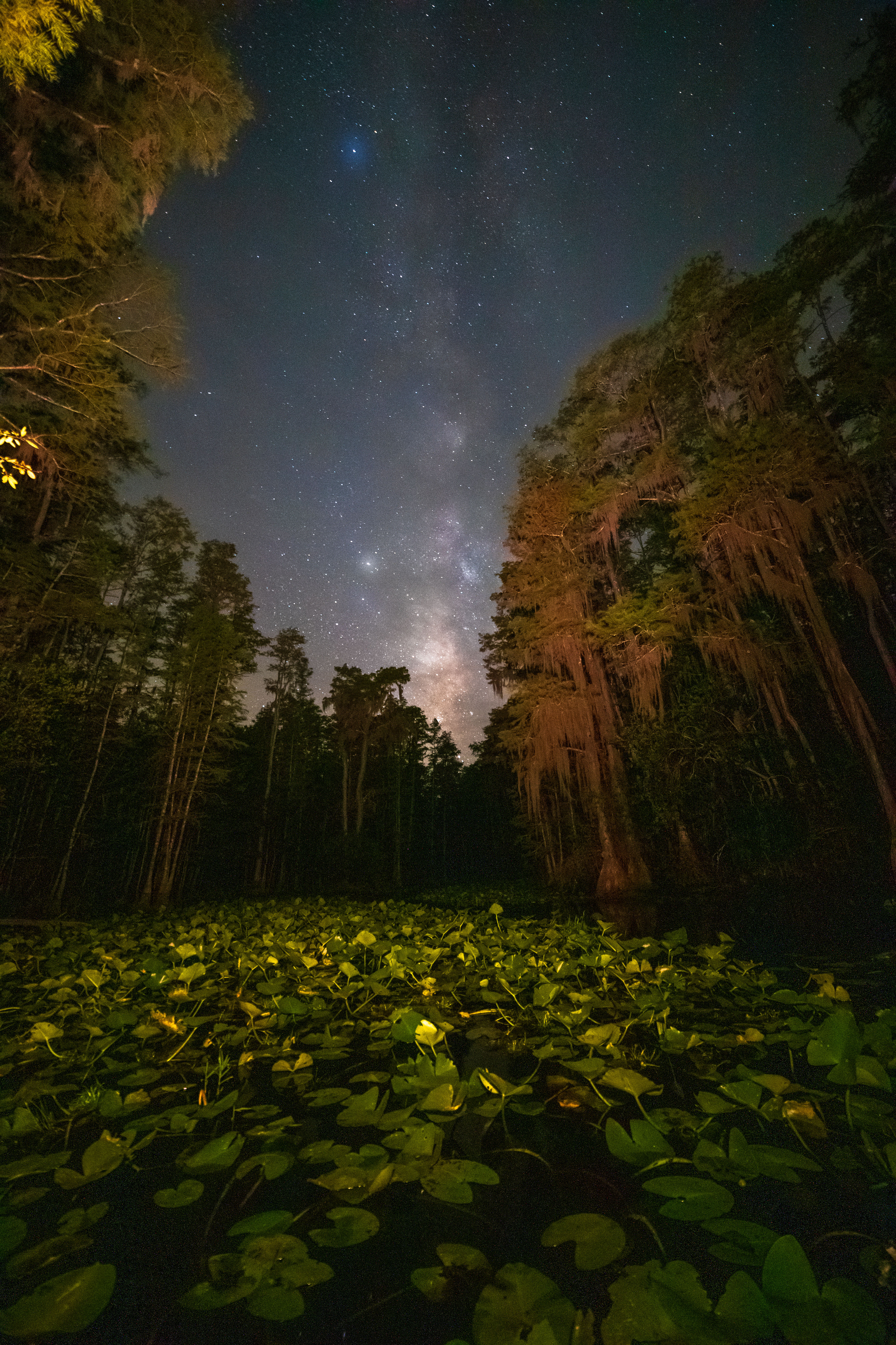 Lily pond in Okefenokee NWR