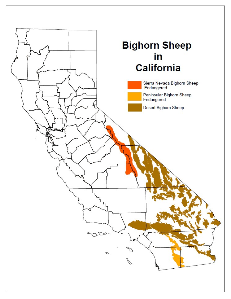 Bighorn sheep in California map