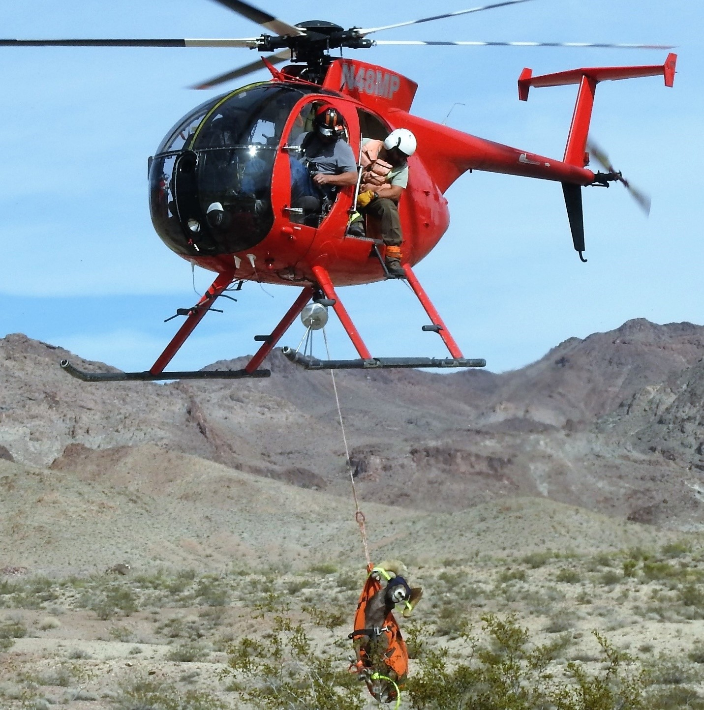 California Department of Fish and Wildlife's contracted Helicopter Bighorn Capture Crew in a 2018 flight at the Marble Mountains of the California Desert