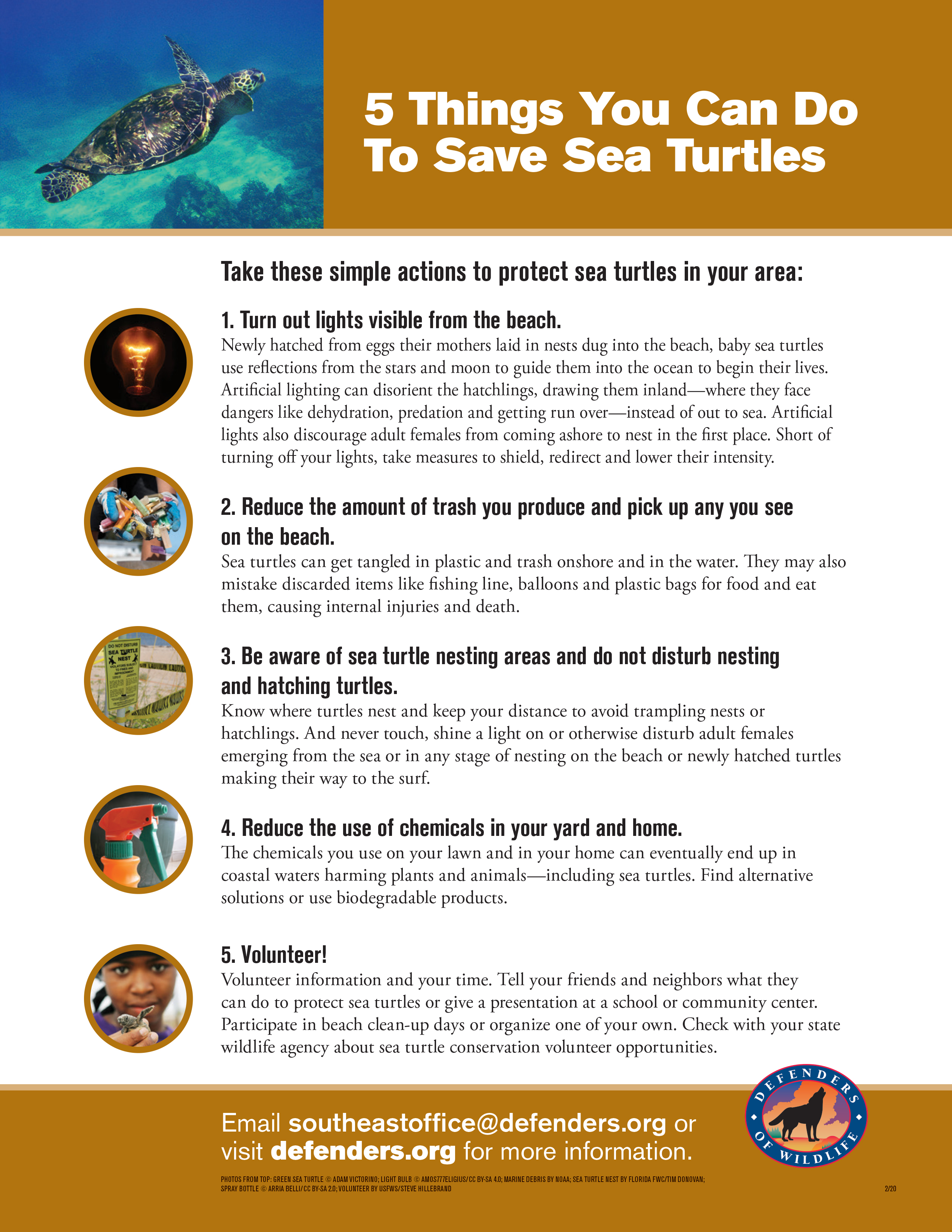 Five 5 things you can do to save sea turtles