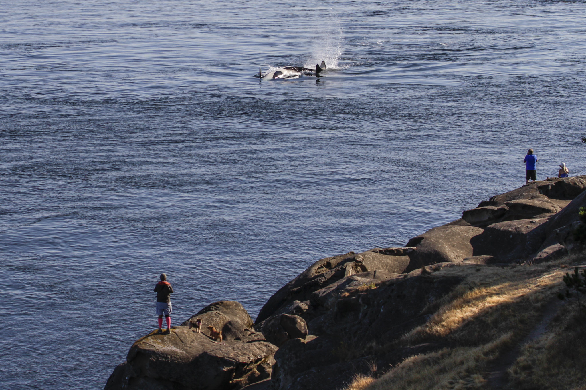 Saturna Island's East Point whale watching bluff, July 25 2018, the start of an encounter with J's and K's