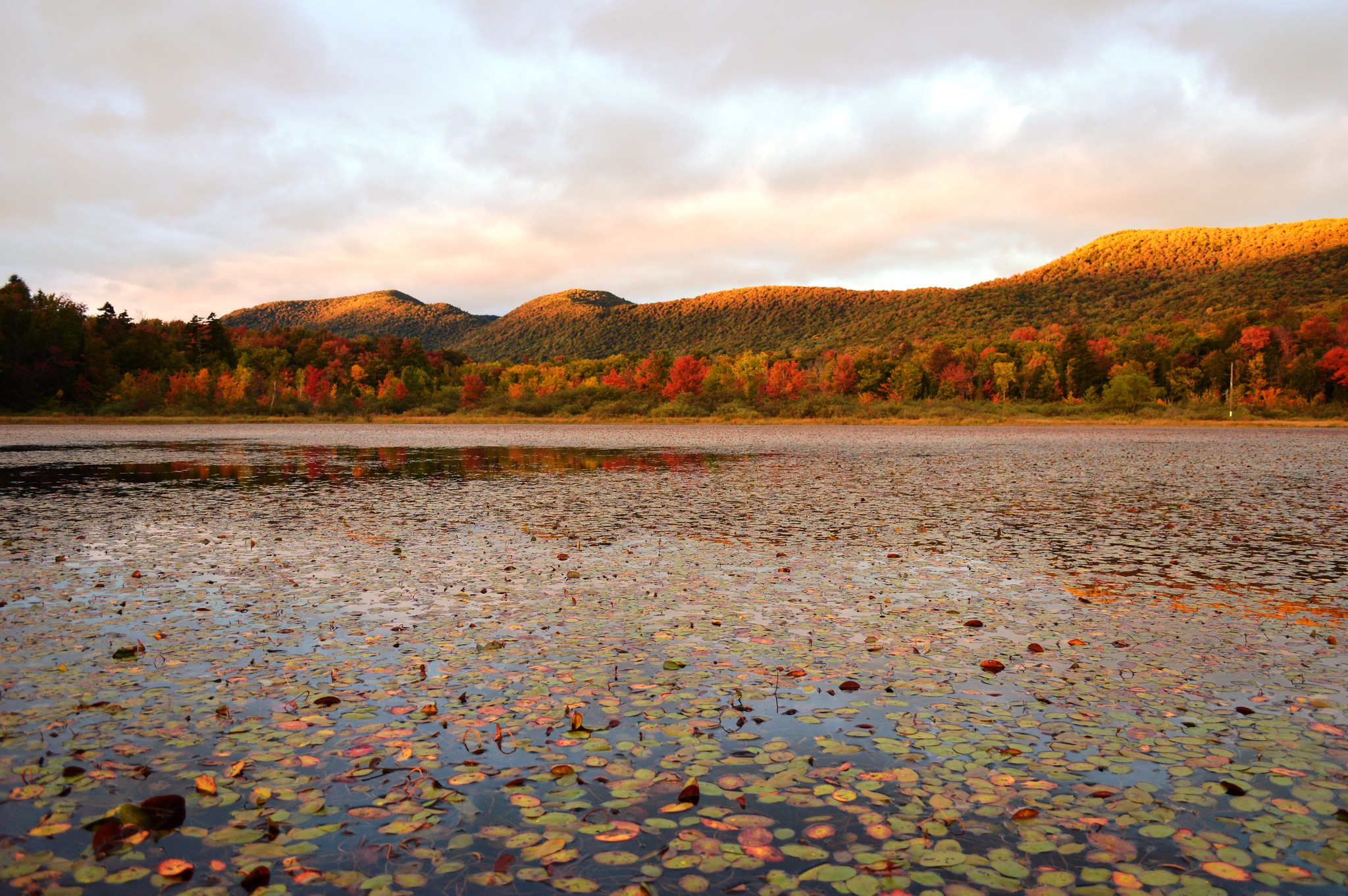 The setting sun highlights the fall foliage at Lefferts Pond on the Green Mountain National Forest