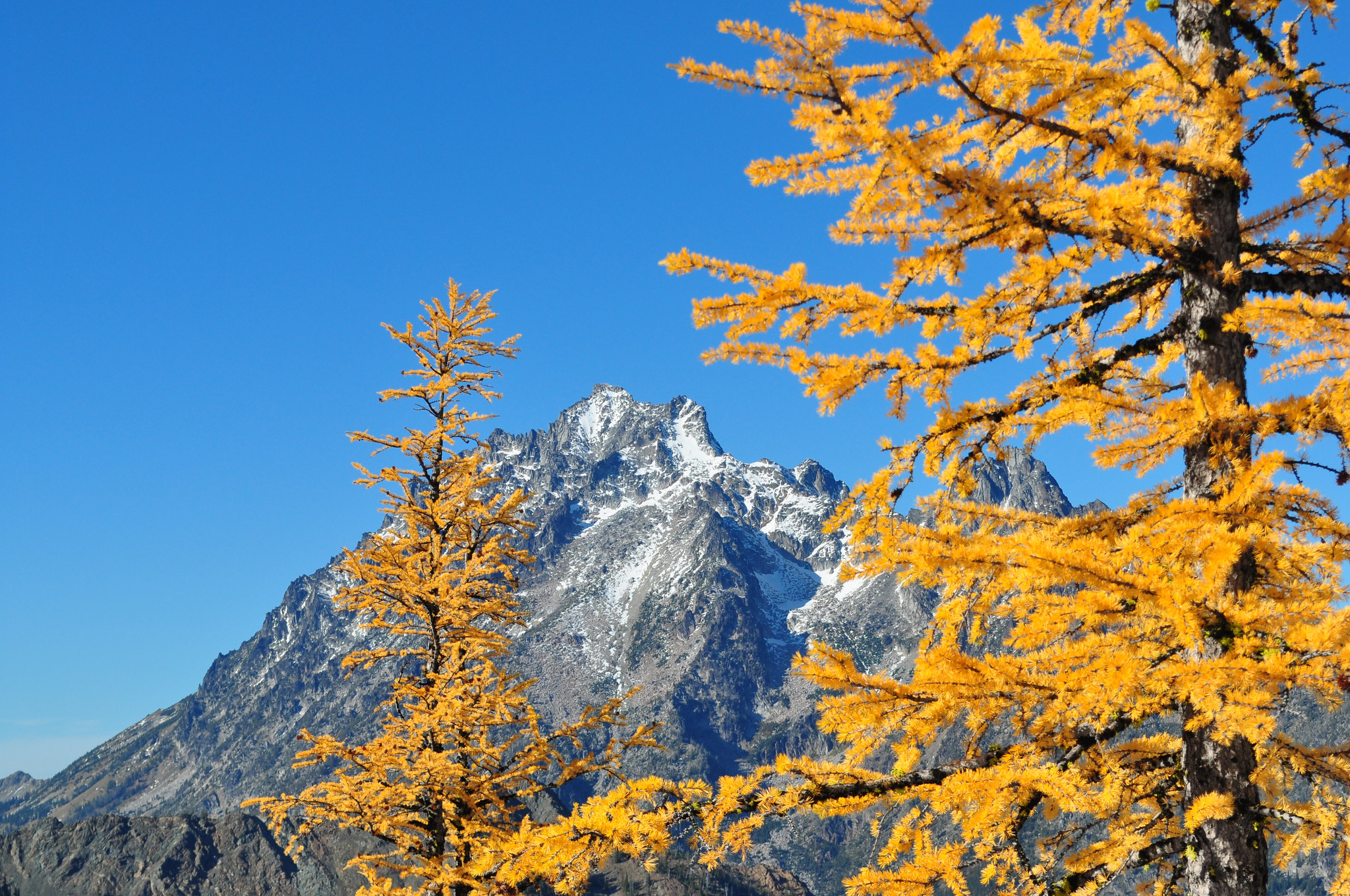 The fall color of a subalpine larch (Larix lyallii) set against Mt. Stewart on the Cle Elum Ranger District, Okanogan-Wenatchee National Forest.