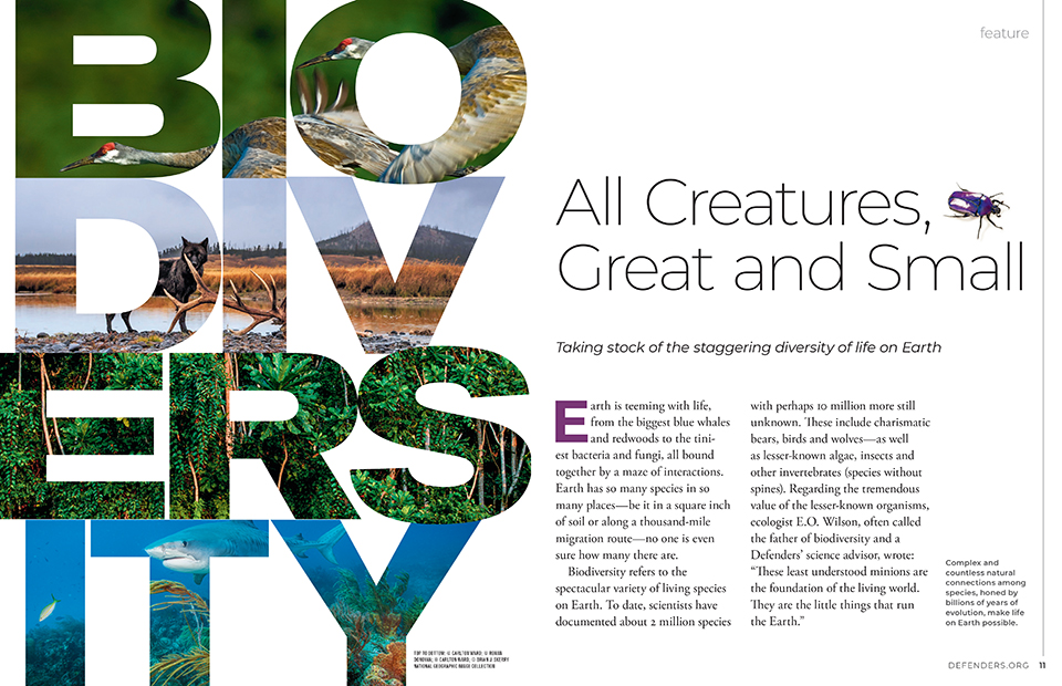 Fall 2002 Feature Opener - Biodiversity
