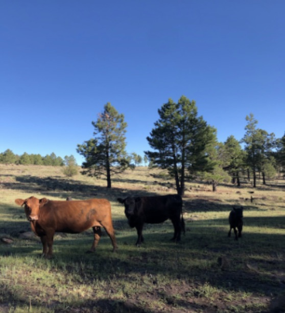 Private ranchland with cows