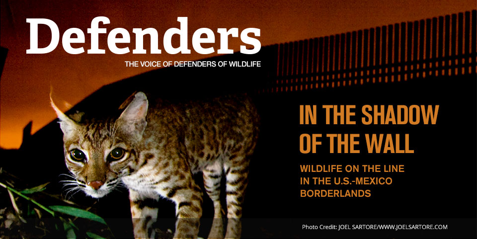 In the Shadow of the Wall: Wildlife on the line in the U.S.-Mexico borderlands