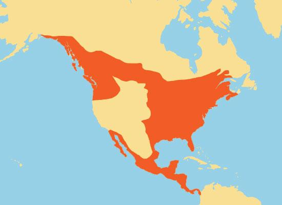 Hummingbird Range Map