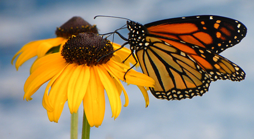 Basic Facts About Butterflies | Defenders of Wildlife