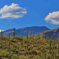 Southwest tuscon cactus and mountains