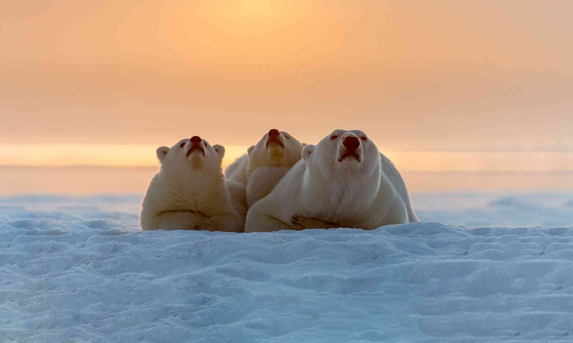 How Climate Change Affects Wildlife A Warmer World From Polar Bears to Butterflies