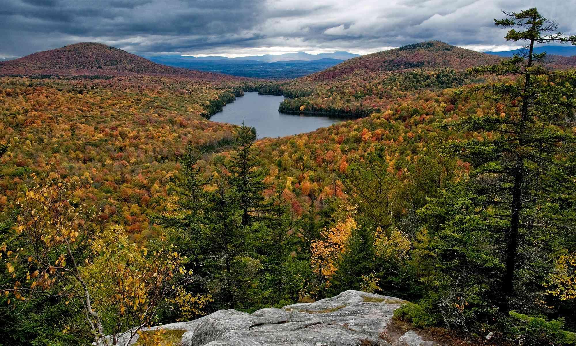 Deciduous Forests Defenders Of Wildlife