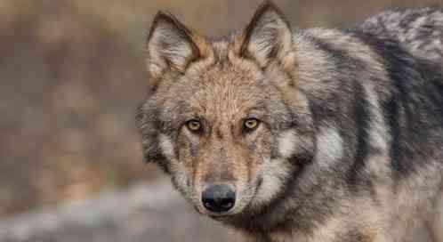 a9af192d Ancient Wisdom | Defenders of Wildlife