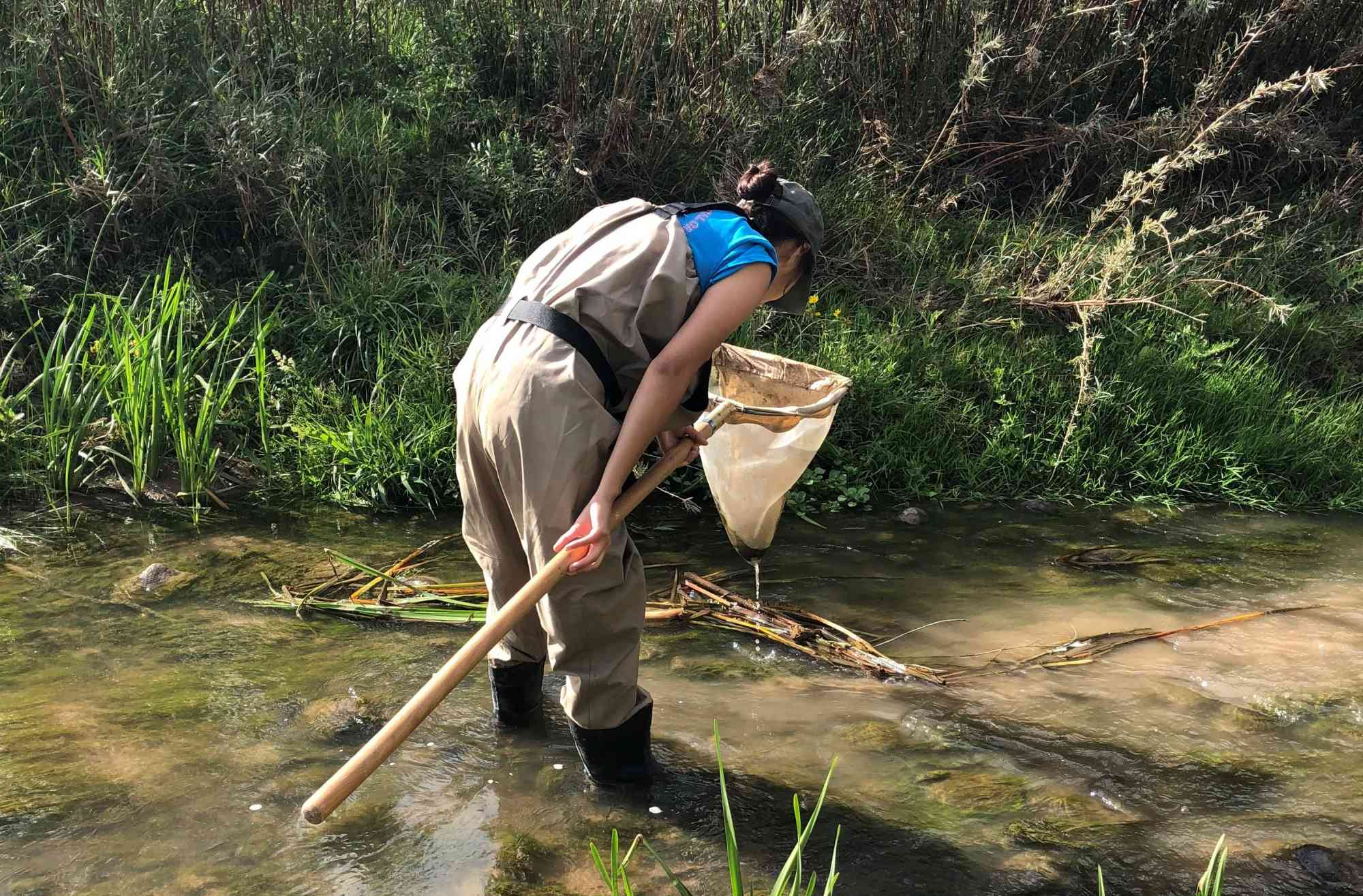 Naanibah using kick net to collect aquatic macroinvertebrate samples
