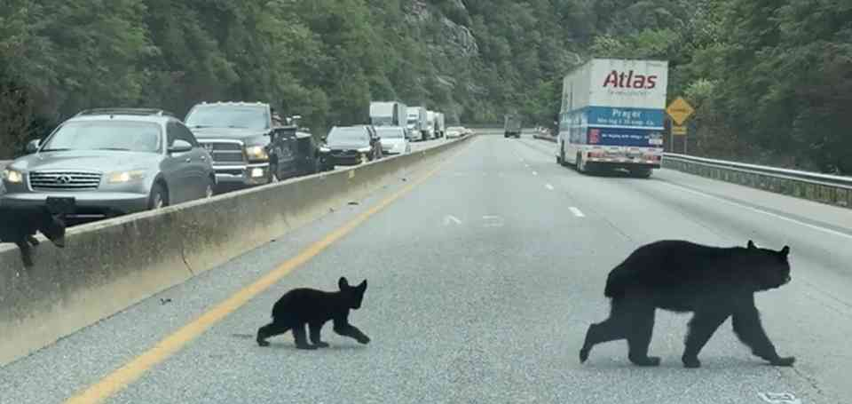 A driver snapped this photo through the windshield at a long and deadly stretch of I-40 outside Great Smoky Mountains National Park.