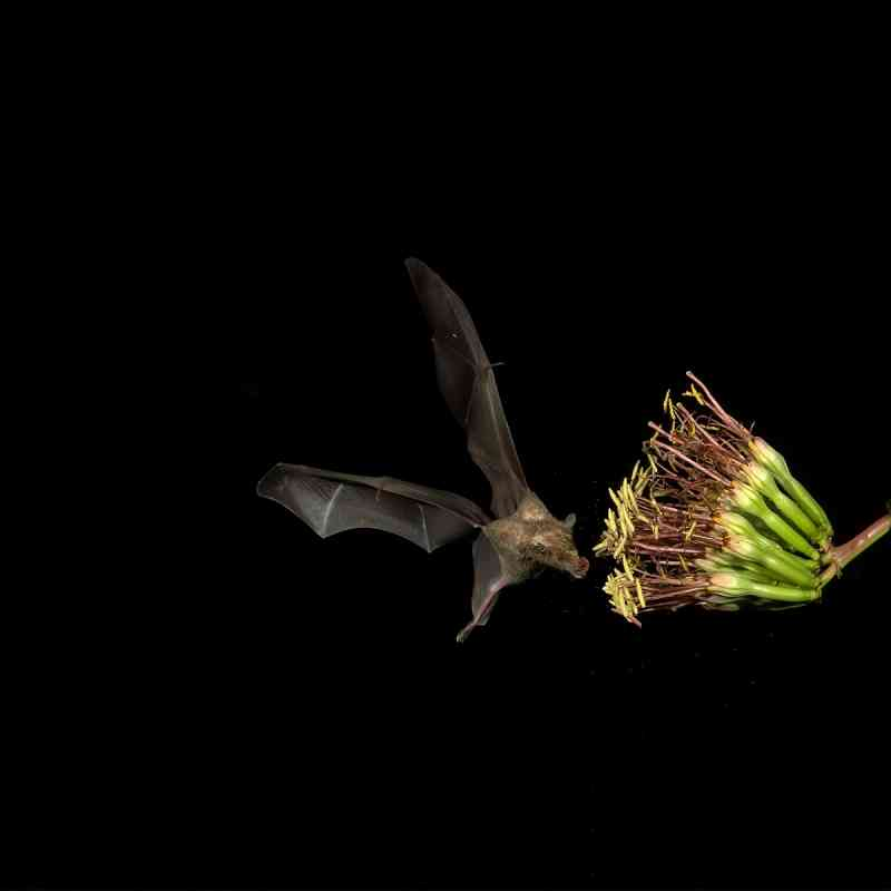 Bats | Defenders of Wildlife