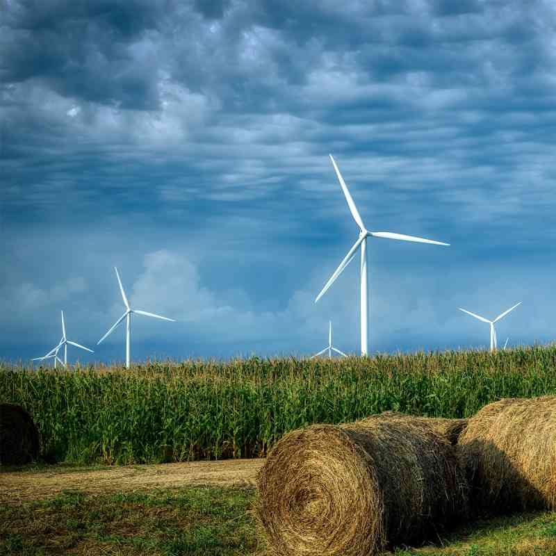 Wind Farm and Field