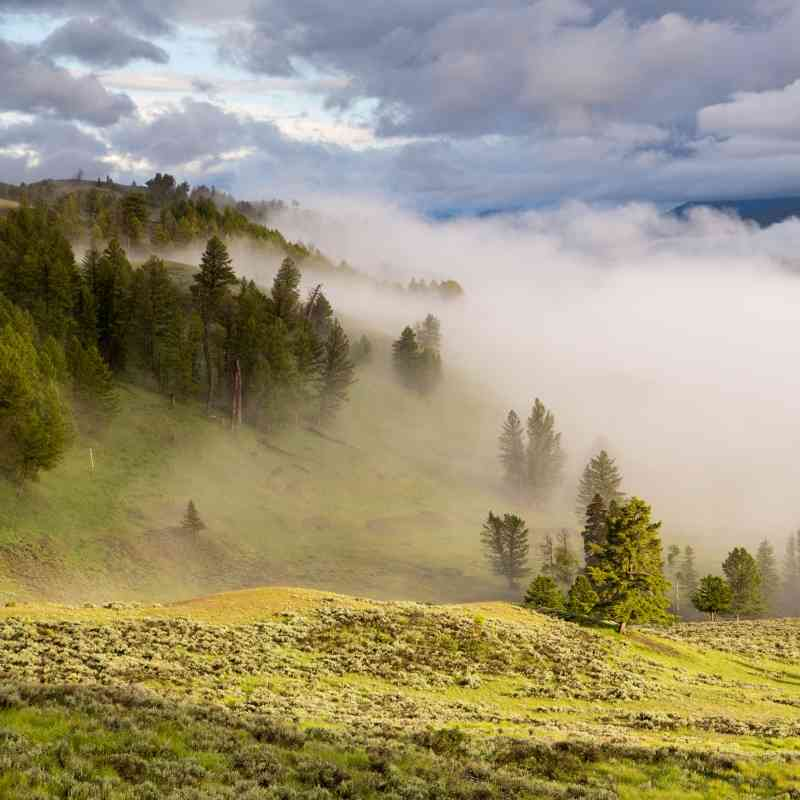 Morning fog in the Yellowstone River Valley