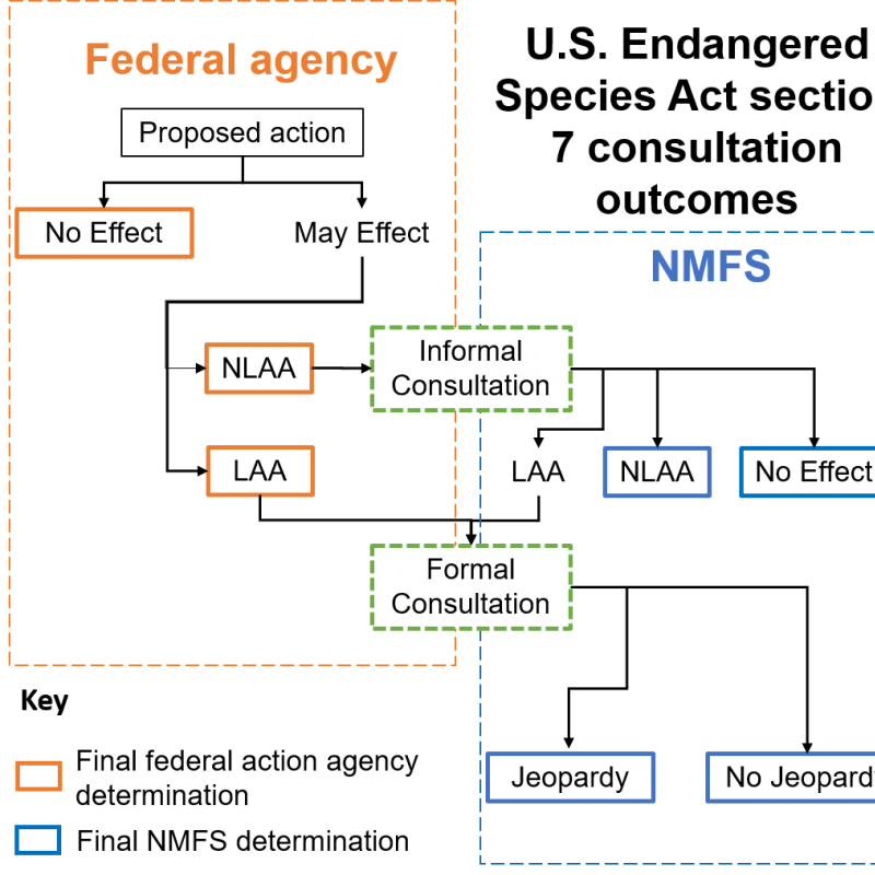 U.S. Endangered Species Act section 7 consultation outcomes