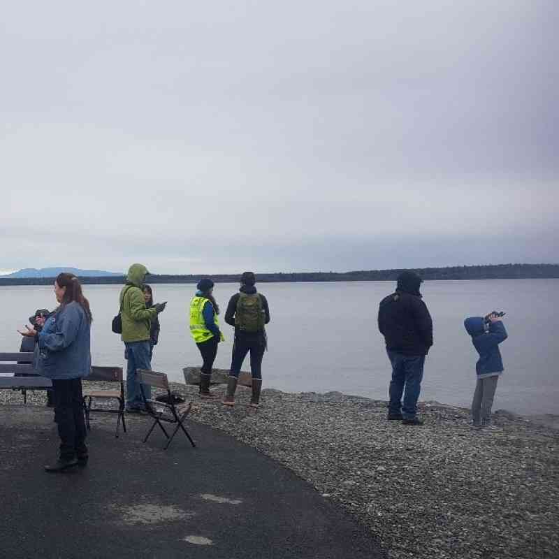 Ship Creek citizen scientists observing the port for belugas