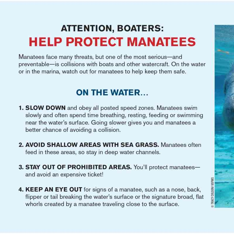 Manatee Safety Card