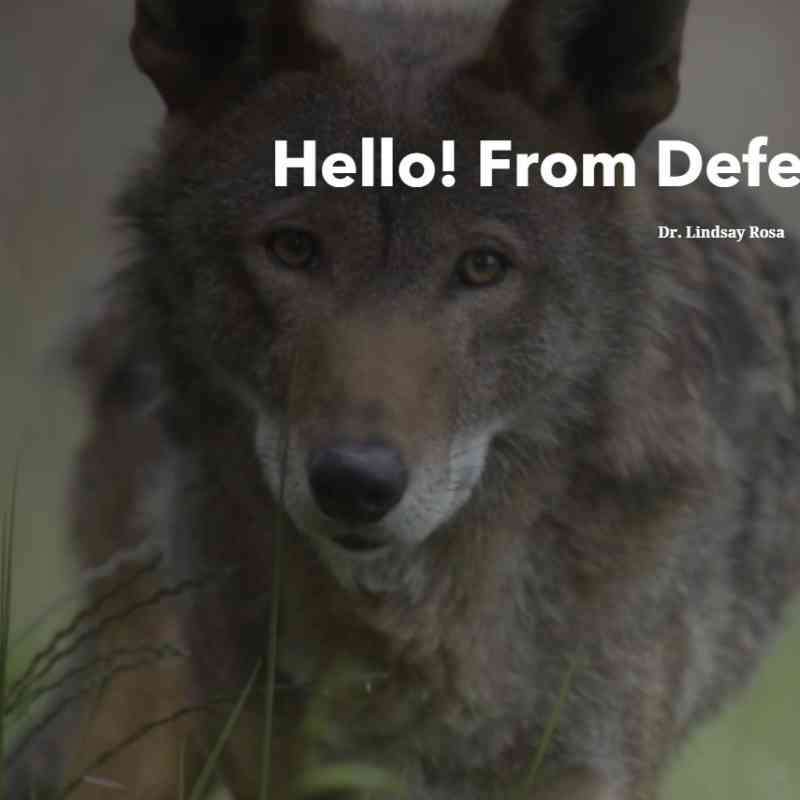 Welcome red wolf storymap screenshot