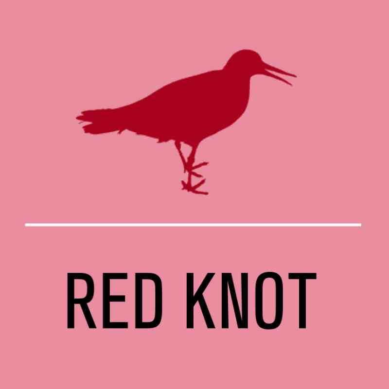 Red knot activist level illustration