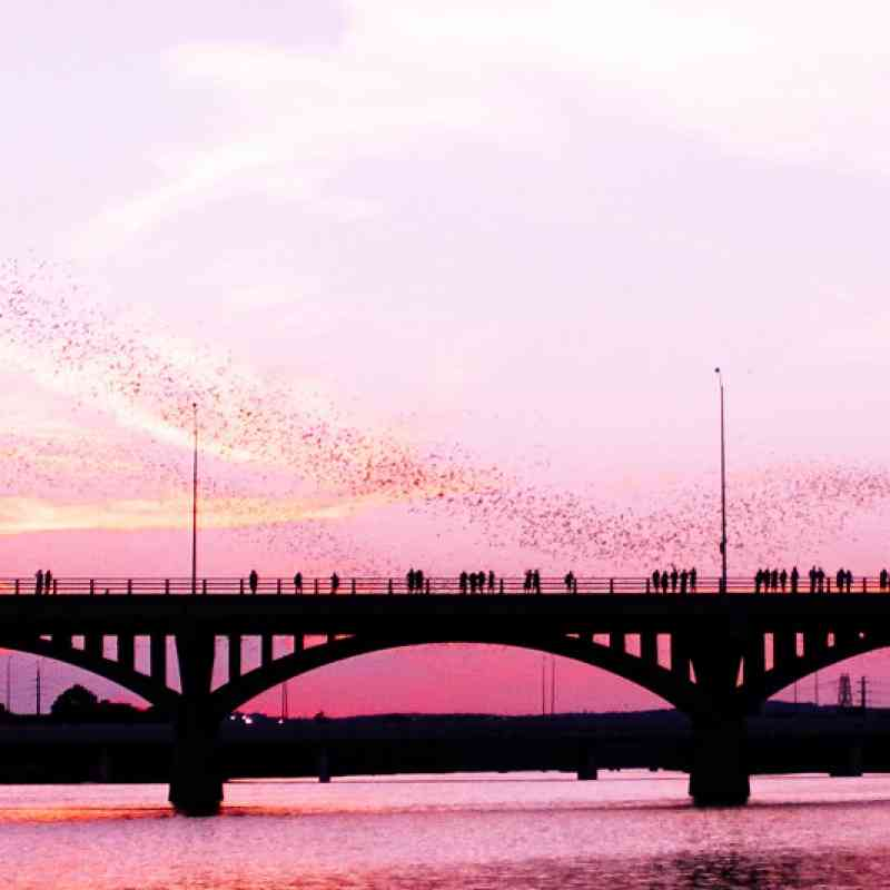 Congress Avenue Bridge with mexican free-tailed bats in Austin, Texas