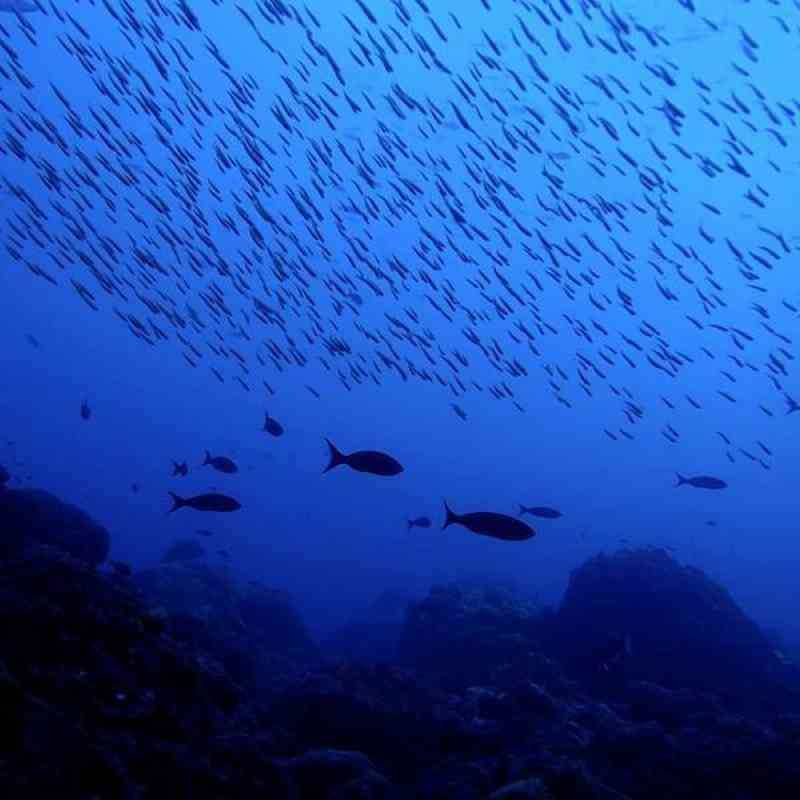 Schools of fish glide over a reef in the Flower Garden Banks National Marine Sanctuary.