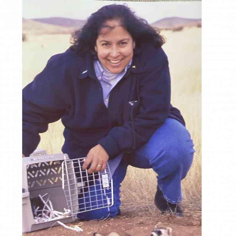 Gaby Chavarria black footed ferret release